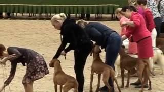 Международная выставка собак CACIB FCI  - день 2 (26.02.2017)