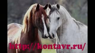 Красивый клип про конный спорт