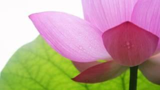 般若波羅蜜多心經唱頌 (Heart Sutra) - 黃慧音 (Imee Ooi)