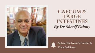 Dr. Sherif Fahmy - Caecum & Large intestines
