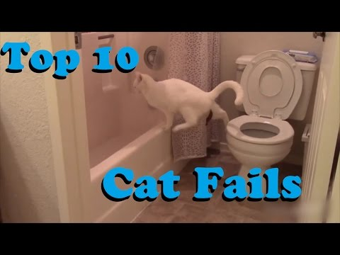 TOP 10 Cat Fails || MaxFiveFails