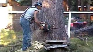 Huge 118 Ft Tree Cutting Lake Almanor Style 7/8/11