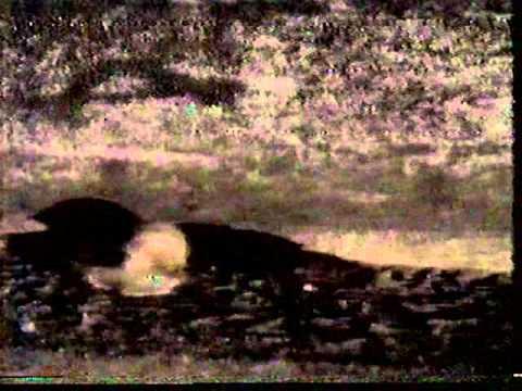 TITÃS BICHOS ESCROTOS- REDE MANCHETE 1986 - YouTube