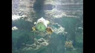 необычные рыбы в аквариуме торгового центра  в России