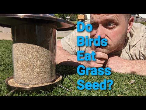 Do Birds Really Eat Grass Seed? Results Will Shake Your Beliefs!