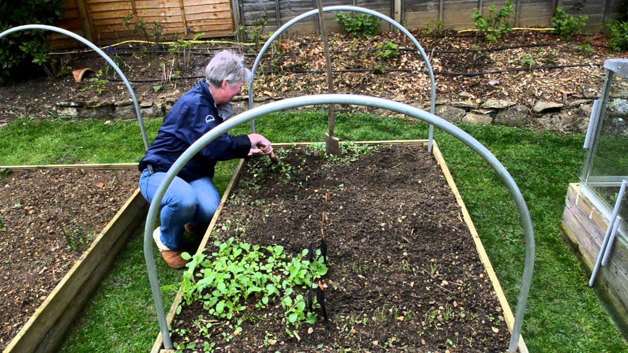 Annes Garden Blog Easy Weeding With Copper Garden Tools Youtube