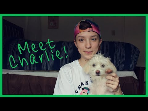 WE GOT A PUPPY!  Meet Our Dog, Charlie!  | ChandlerNWilson