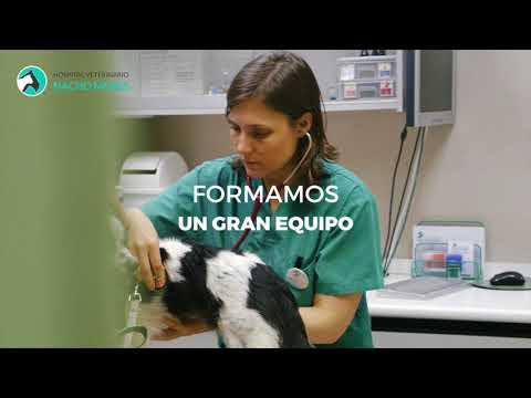 Equipo De Veterinarios Del Hospital Veterinario Nacho Menes