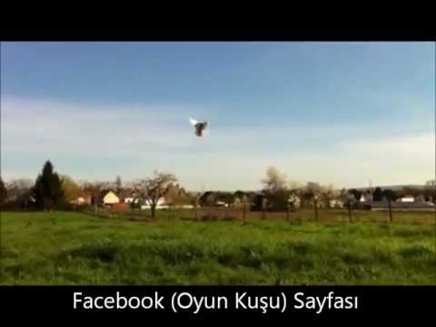 (Oyun Kusu) THE TURKISH FAMOUS CRAKTUMBLER PIGEONS (3)