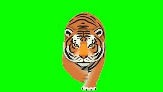 Walking tiger green screen,Tiger Animation video,