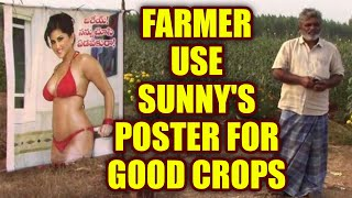 Sunny Leone posters saved Andhra farmer's crops from evil gaze | Oneindia News