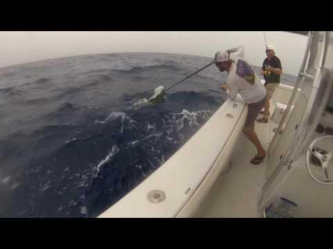 Offshore Fishing Key West Mahi,sail,wahoo 2017