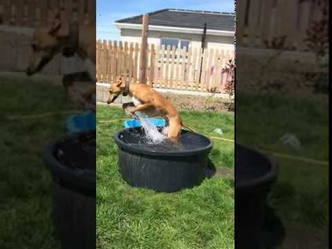 Pool dog. Watch till the very end!
