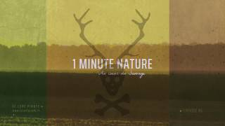 Le Cerf Pirate - 1 MINUTE NATURE - EP 06