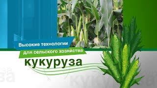 Инновационная защита кукурузы