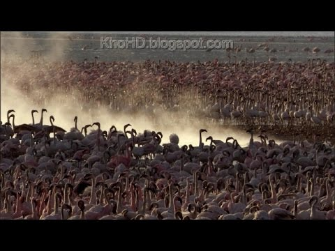 Animal Documentary 2015| Africa: Wild Kalahari | National Ge
