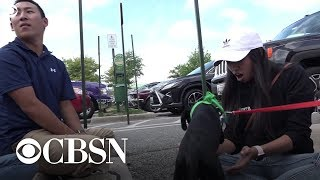 Florence: Dogs evacuated from storm find new families