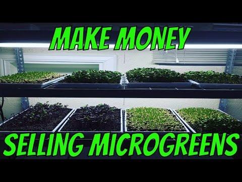 Make Money Growing Microgreens