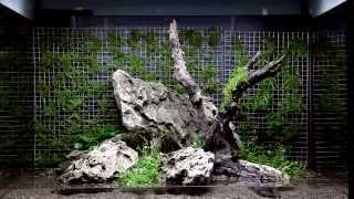 bitkili akvaryum kurulumu dizayn 64 tropica