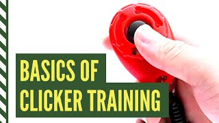 Clicker Training Basics: How to Introduce the Clicker for Dogs