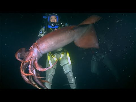 Red Devil Squid BITES Diver | Deadly 60 | Earth Unplugged