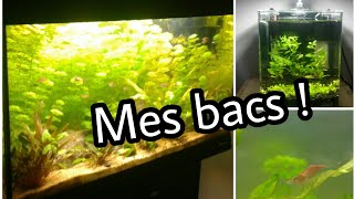 Vlog: Tour de mes aquariums !