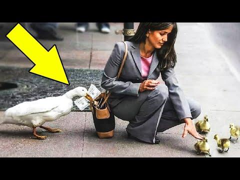 7 حيوانات مدمنة على السرقة,رقم 6 في القائمة أذكى حيوان لص في العالم يسرق أشياء ثمينة ويبدلها بالطعام  - نشر قبل 2 ساعة