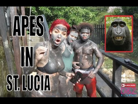 PLANET OF THE APES IN ST. LUCIA VLOG