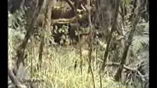 RUWENZORI-Märchenwelt-Wanderung mit afrikanischer Traum-MUSIK; Zus.-fsg.