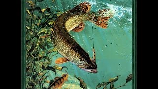 видео отдых на рыбалке на волге