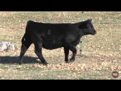 Polzin Cattle 2014 May Broker