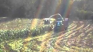Harvesting Maize in County Kilkenny!