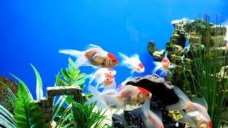 Идем в зоомагазин смотреть рыбок!(Идем в зоомагазин смотреть рыбок, рептилий и различных животных. Оскар смотрит рыбок и птиц., 2016-02-18T00:25:04.000Z)