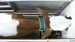 Automatic Calf Feeder (english)