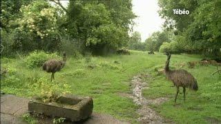 Parc animalier privé de Saint Alban menacé de fermeture