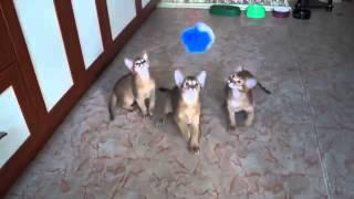 армия кошек видео