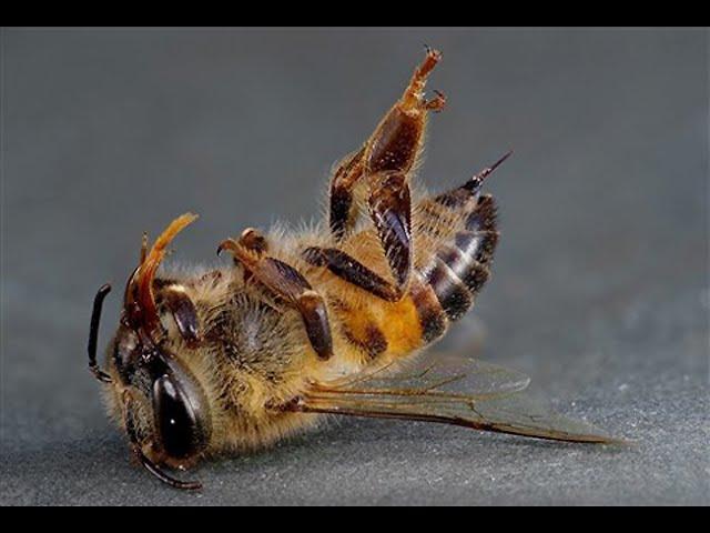 Insektdøden fra 4G og 5G