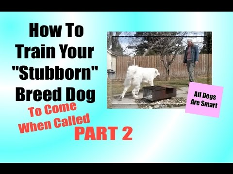 "How To Teach Your ""Stubborn"" Breed Dog To Come When Called Part TWO"