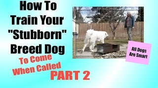 How To Teach Your 'Stubborn' Breed Dog To Come When Called Part TWO