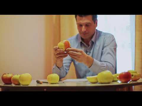 Сорта яблони после хранения (Часть 2)