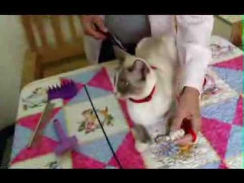 Edm Cat Fanciers Club