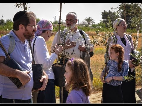 Planting Fruit Trees In Southern Israel