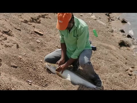 Patan fish# valiga fish#damfishng#hyd fishing.