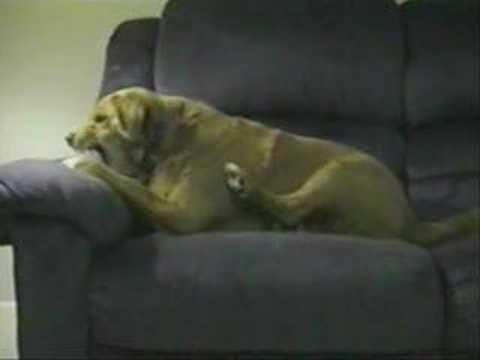 The World Most Stupidest Dog
