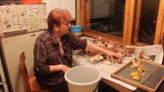 Засолка грибов. Видеокурс. часть 1 Первичная чистка и нарезка.