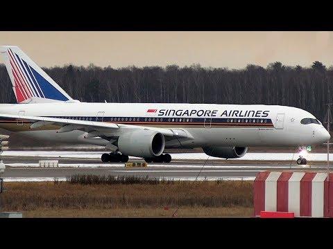 Лиса и Airbus A350 на фоне Трансаэро / Москва - Домодедово 2020