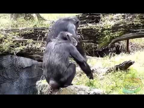 Funny Monkey videos