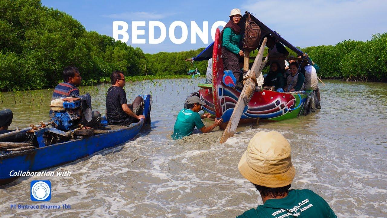 Penanaman 1500 Mangrove PT Bintraco Dharma Tbk x LindungiHutan   Bedono Sayung Demak