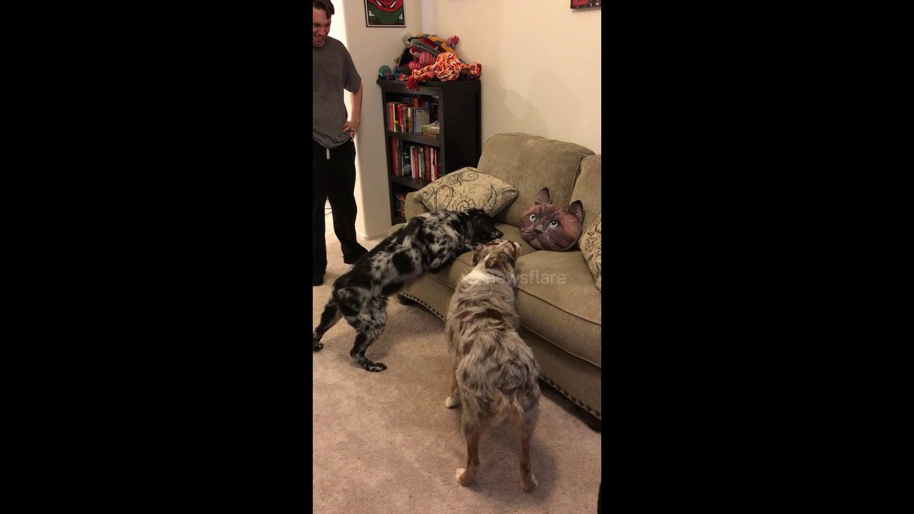 Dogs Get Freak Out by Cat Pillow