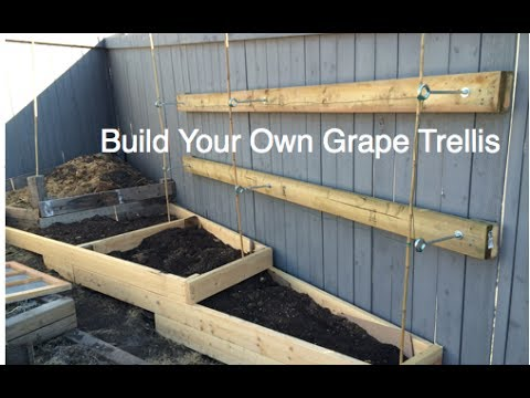 how to build a simple grape trellis on a residential fence diy in